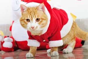 卖萌猫咪过圣诞节