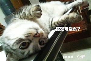 一只叫丑妹的幸福猫咪