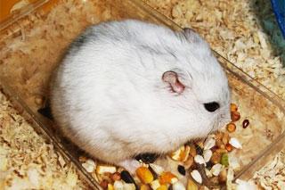 漂亮又亲人的小鼠白豆丁