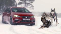 雪地驰骋 西雅特Leon Cupra比拼雪橇犬