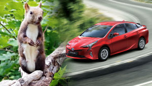 2016款丰田普锐斯 趣味绕桩惊动松鼠