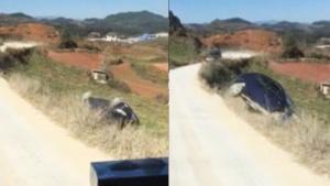 自杀试开车,让人吃了一鲸