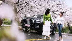 小姐姐与哈弗H6的樱花之旅 最后竟惨遭洗车?!